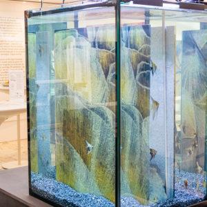 Maluni Aquarium